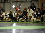 WORLD DOG SHOW PARIS